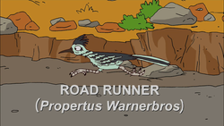 Road Runner.png